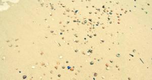 Muscheln am Strand Muscheln umdrehen